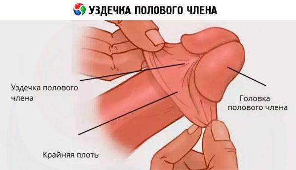 inel de reducere a penisului ce dimensiune prefera fetele penisul